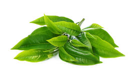 Green tea leaf on white background. Royalty Free Stock Photos