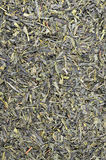 Green Tea Leaflets Stock Images