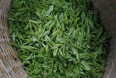 Green tea leaves. Freshly picked green tea leaves stock photo