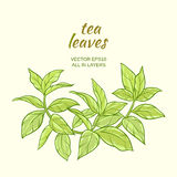 Green tea leaves. Illustration with green tea leaves on color background Royalty Free Stock Photo