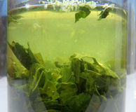 Green tea leaves steeping Royalty Free Stock Images