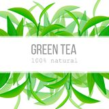 Green tea leaves and twig Horizontal label with text 100 percent natural. Green tea leaves and twig label with text 100 percent natural. Horizontal. fruits above Stock Photo