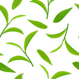 Green tea leaves and twigs, seamless pattern vector, on white background royalty free illustration