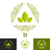 Green tea logo branding concept. Royalty Free Stock Photos