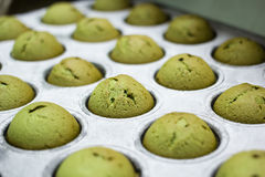 Green tea muffin cupcakes in baking pan Royalty Free Stock Photo
