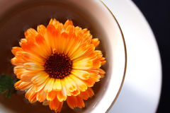 Green tea with a  orange flower. Green tea with a bright orange flower Royalty Free Stock Image
