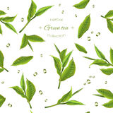 Green tea pattern. Vector green tea seamless pattern with transparent teapot, tea leaves and drops. Background design for green tea, drink menu, homeopathy and Royalty Free Stock Image