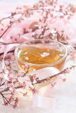 Green tea and pink blossom brunch. Green tea in the glass cup and blossom almond brunch. Selective focus Stock Photos