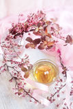 Green tea and pink blossom brunch. Green tea in the glass cup and blossom almond brunch. Selective focus Royalty Free Stock Images