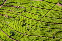 Green tea plantation in the highlands of Sri Lanka stock photo