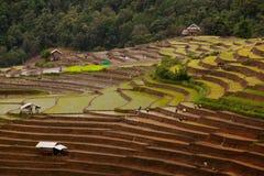 Green tea plantation landscape Royalty Free Stock Photos
