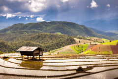 Green tea plantation landscape Royalty Free Stock Photo