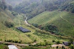 Green tea plantation landscape Royalty Free Stock Image
