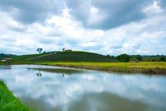 Green tea plantations stock photography
