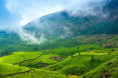 Green tea plantations with fog early in the morning, Munnar, Ker Royalty Free Stock Photos
