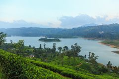 tea plantations high in the mountains royalty free stock image