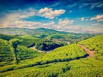 Green tea plantations in India Stock Photo