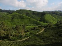 Green tea plantations in Malaysia royalty free stock image