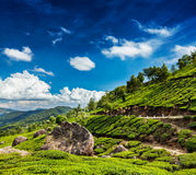 Green tea plantations in Munnar, Kerala, India Stock Photography