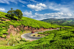 Green tea plantations in Munnar, Kerala, India. Kerala India travel background - car on road in green tea plantations in Munnar, Kerala, India stock images
