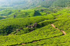 Green tea plantations in Munnar, Kerala, India Stock Photography