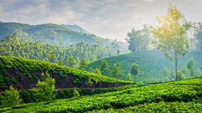 Green tea plantations in Munnar, Kerala, India. Kerala India travel background - panorama of green tea plantations in Munnar, Kerala, India in the morning on Royalty Free Stock Image