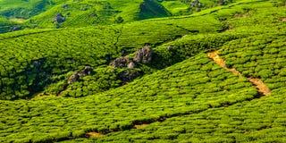 Green tea plantations in Munnar, Kerala, India. Kerala India travel background - panorama of green tea plantations in Munnar, Kerala, India - tourist attraction Stock Photos