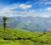 Green tea plantations in Munnar, Kerala, India Stock Photos