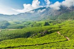 Green tea plantations in Munnar, Kerala, India Stock Images