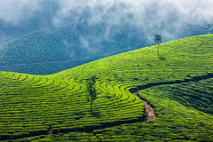 Green tea plantations in Munnar, Kerala, India. Kerala India travel background - green tea plantations in Munnar, Kerala, India - tourist attraction royalty free stock photo