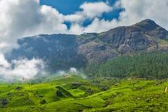 Green tea plantations in Munnar, Kerala, India Royalty Free Stock Images