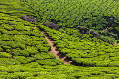 Green tea plantations in Munnar, Kerala, India Royalty Free Stock Images