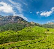 Green tea plantations in Munnar, Kerala, India Royalty Free Stock Photo