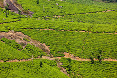Green tea plantations in Munnar, Kerala, India Royalty Free Stock Photography