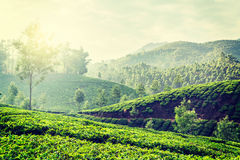 Green tea plantations in Munnar, Kerala, India. Vintage retro hipster style travel image of Kerala India travel background - green tea plantations in Munnar stock image