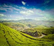 Green tea plantations in Munnar, Kerala, India Stock Photo