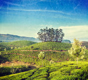 Green tea plantations in Munnar, Kerala, India. Vintage retro hipster style travel image of Kerala India travel background - green tea plantations in Munnar Stock Images