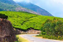 Green tea plantations with road and clouds in the morning, Munna Stock Images