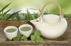 Green tea pot Stock Image