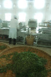 Green tea processing factory Stock Photos