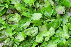 Green tea raw leaves Stock Photo