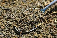 Green tea. In spoon close-up stock photos