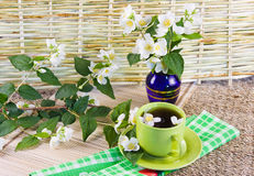 Green tea and sprigs of jasmin Stock Photo