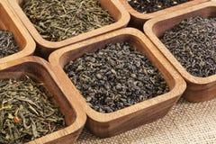 Green tea ssample set Royalty Free Stock Photo