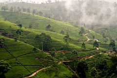 Green tea terrasses in the highland from Sri Lanka Royalty Free Stock Photos