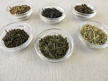 Green tea varieties Royalty Free Stock Photography