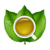 Green Tea. Vector Stock Photo