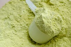 Green Tea Whey Protein stock images