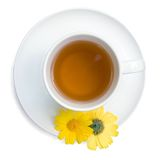 Green tea in a white cup Stock Images