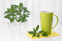 Green teacup and fresh mint Royalty Free Stock Images